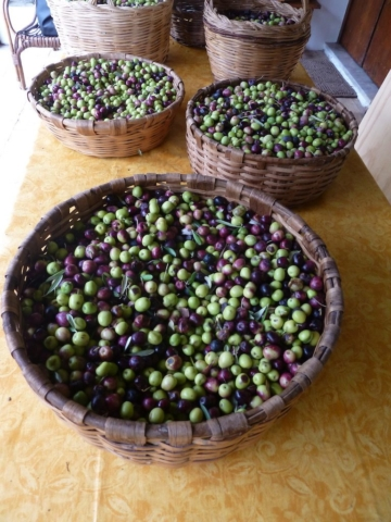 Cesto olive